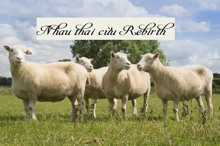 Review hãng nhau thai cừu Rebirth của Úc