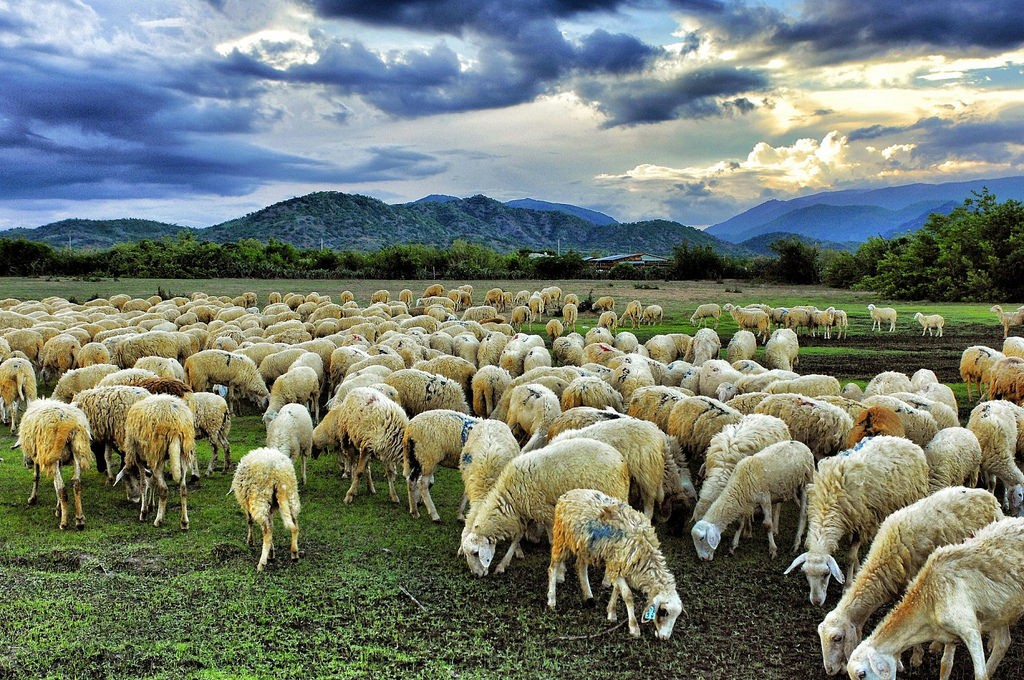 nhau thai cừu có tác dụng gì, nhau thai cừu có thực sự tốt, nhau thai cừu có tác dụng như thế nào, nhau thai cừu có tác dụng phụ không, mặt nạ nhau thai cừu là gì, nhau thai cừu của úc là gì, tế bào gốc nhau thai cừu là gì, công dụng của nhau thai cừu là gì, nhau thai cừu trong tiếng anh là gì, tinh chất nhau thai cừu là gì