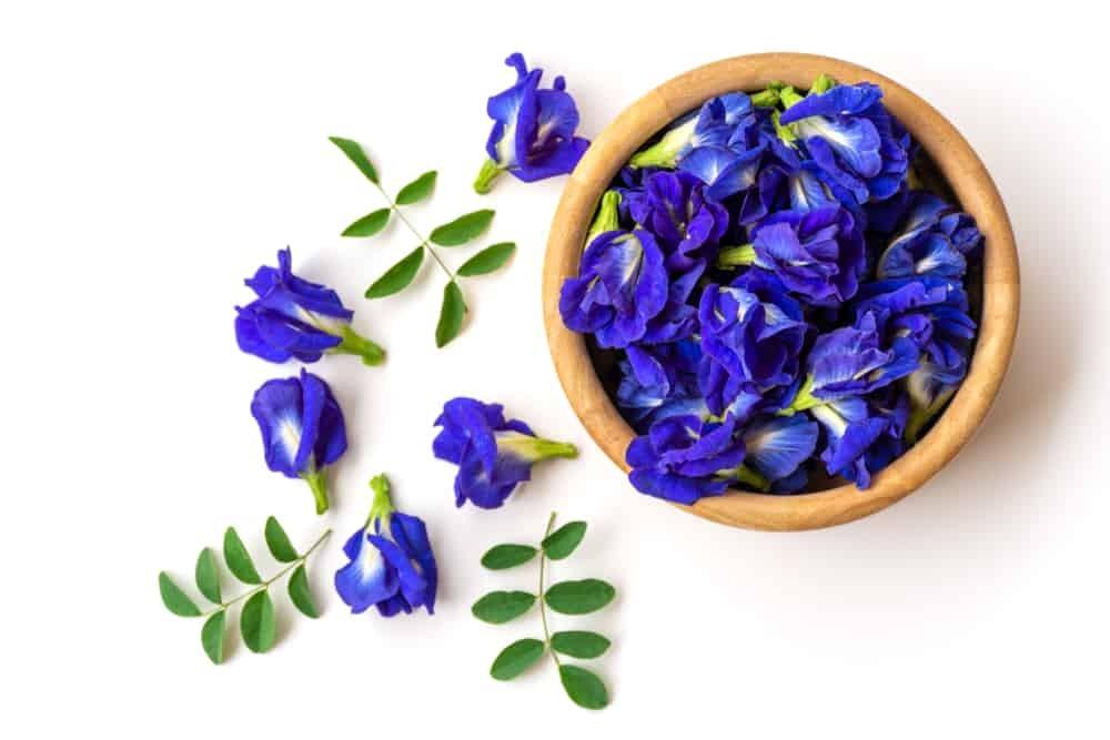 lá hoa đậu biếc, hoa đậu biếc làm đẹp, làm gì với hoa đậu biếc, sử dụng hoa đậu biếc, làm đẹp với hoa đậu biếc, tác dụng làm đẹp của hoa đậu biếc, cách làm đẹp bằng hoa đậu biếc
